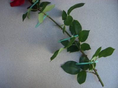 切り花や剪定枝の切る位置