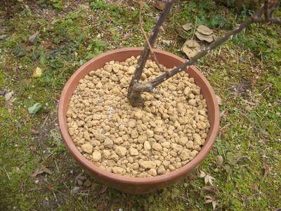 雑菌のない、水はけの良い用土に植え替え