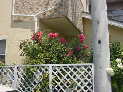 赤と白のバラと明るいベージュの壁面