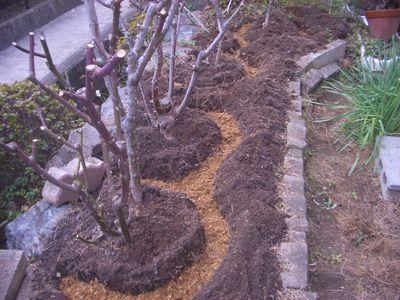 バラの元肥作業