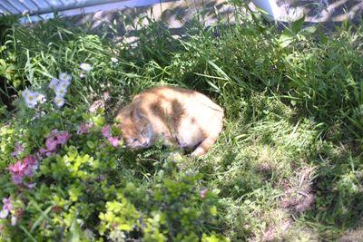 庭に咲くバラや花の野良猫被害